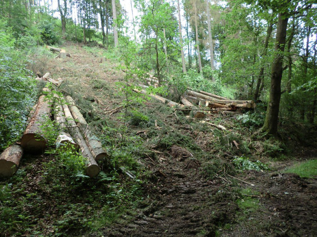 Baumfällarbeiten am Zugang Lydiastollen.